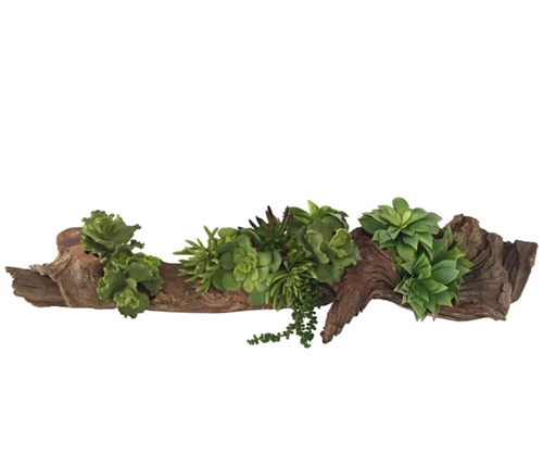 Large Drift Wood with Succulents Modern Floral Arrangement