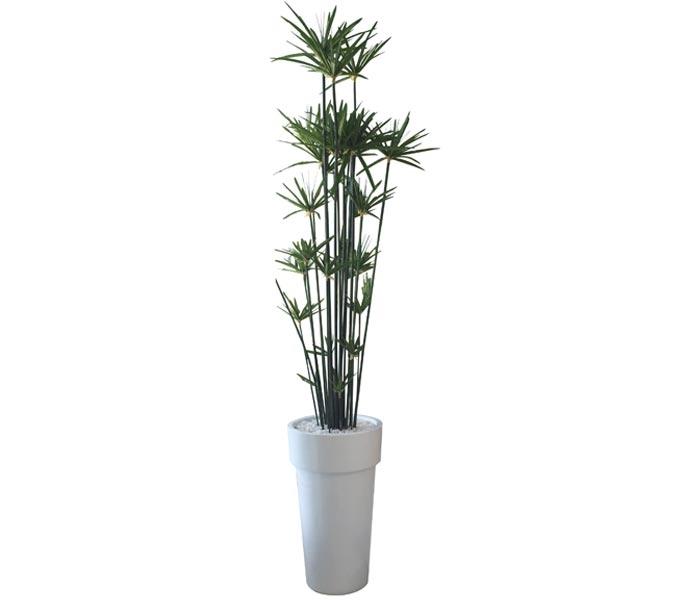 Fl Arrangement Papyrus Tree With White Modern Planter Medium Mh2g