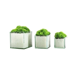 Glass Plate Cube Modern  Planter 4""