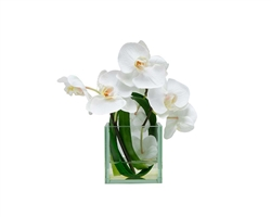 Glass Plate Cubes with Green Leaves and White Orchids