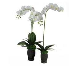 White Orchids with Vine on White Face Base - Small