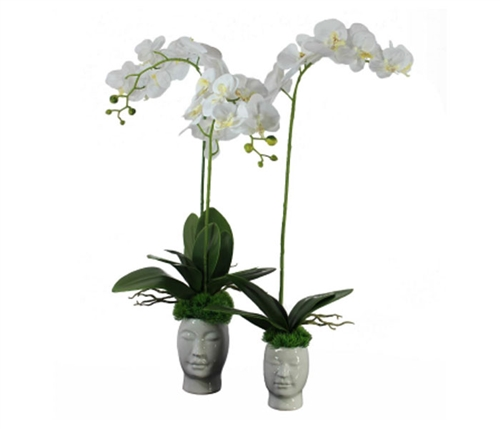 White Orchids with Vine on White Face Base