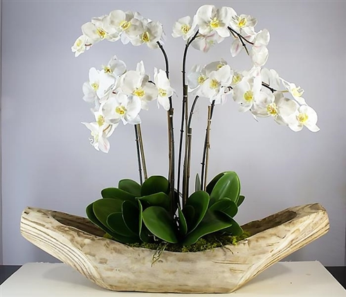 "Fortune boat Modern planter 35""x 8.5""x 9"" with Phalaenopsis orchids"