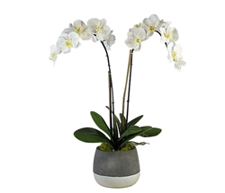 Grey and White Modern Concrete ash pot with orchid MEDIUM
