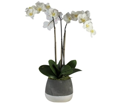 Grey and White Modern Concrete ash pot with orchid LARGE