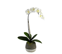 Grey and White Modern Concrete ash pot with orchid SMALL
