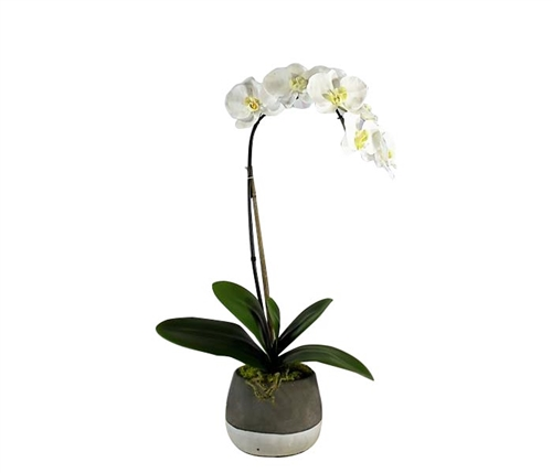Grey and White Concrete ash pot with orchid
