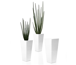 Beau Modern Vase with Snake Grass - WHITE 4 Feet