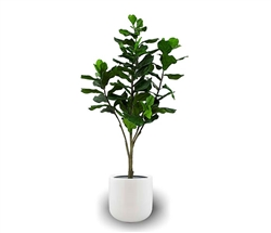 Frette Modern Pot with Fiddle Tree - WHITE 6 Feet