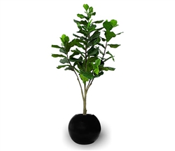 Beth Modern Round Pot with Fiddle Tree - BLACK