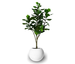 Beth Modern Round Pot with Fiddle Tree - WHITE