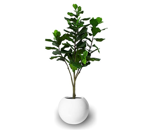 Beth Modern Round Pot with Fiddle Tree
