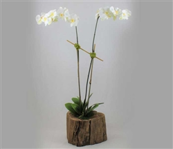 Modern Wood Stump with Double Stemmed Phalaenopsis Orchids