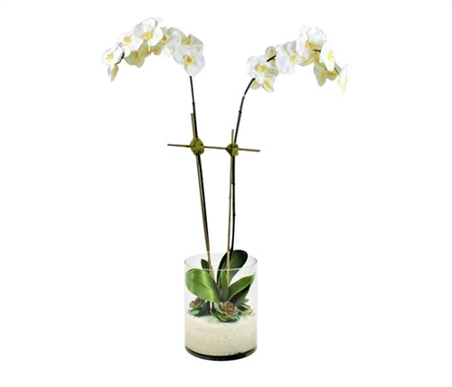 Rota cylinder with white Phalaenopsis orchids, succulents and white pebbles