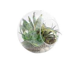 Succulent terrarium in glass - *