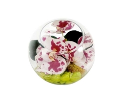 Succulent terrarium in glass With Orchids.  Modern Flower Arrangements
