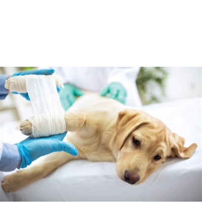 Pet First Aid Basics - 9/7/19