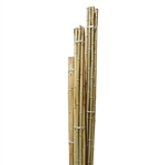 Our long bamboo poles can be used for any application indoor or outdoors such as gardening, trellis or decoration around the house.