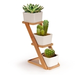 succulent pot display set