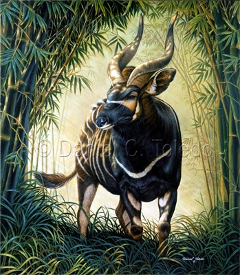 "GICLEE PRINT ""BONGO OF THE ABERDARE FOREST"""