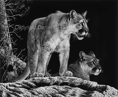 "SCRATCHBOARD PRINT ""MATES OF THE WILD"""