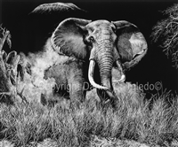 "SCRATCHBOARD PRINT ""ANGRY TUSKER"""