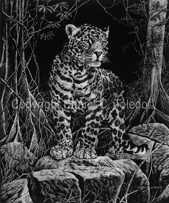 "SCRATCHBOARD PRINT ""MASTER OF THE JUNGLE"""