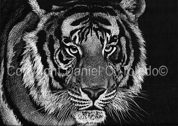 "SCRATCHBOARD PRINT ""I AM TIGER"""