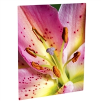 "ChromaLuxe Matte White Aluminum Photo Panel 5""x7"" - 10 Sheets"