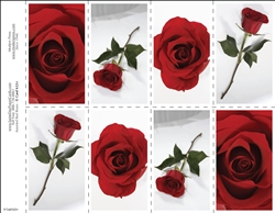 652-r Assorted Red Roses 8-Up Prayer Card