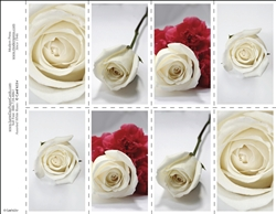 653-r Assorted White Roses 8-Up Prayer Card