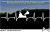Custom Border Collie Heartbeat Dog Car Truck RV Window Decal Sticker