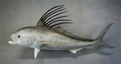 "Roosterfish 44"" (CC) L"