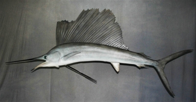"Sailfish 090"" (RA) L"