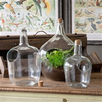 Glass Bottle Terrariums: Large