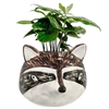 Petite Racoon Wall Planter