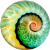 Nautilus Art Glass Paperweight