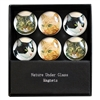 Cat Selfie Glass Magnets