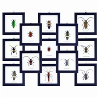 Bug Frame Collection