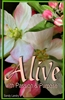Alive With Passion and Purpose by Sandy Landry