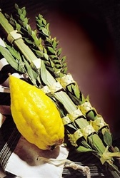 Lulav and Etrog Set for Sukkot
