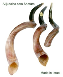 Shofar - Yemenite