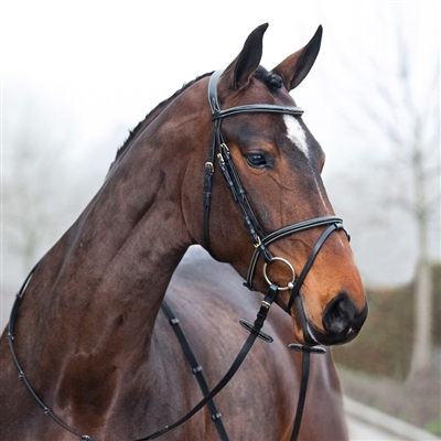 Horze Constance Padded Flash Bridle