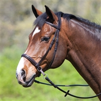 Bitless Bridles by Dr. Cook - Leather