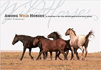Among Wild Horses: A Portrait of the Pryor Mountain Mustangs by Lynne Pomeranz