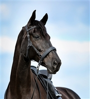 Barefoot Contour Physio Bridles