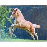 Intrepid International Mousepad Haflinger Foal