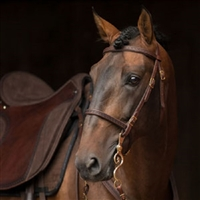 Dp Soft Feel Baroque Bridle With Tooling