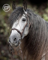 DP Saddlery Soft Feel Baroque Deluxe Headstall Bridles