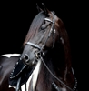 Dp Soft Feel Baroque Bridle Brilliant